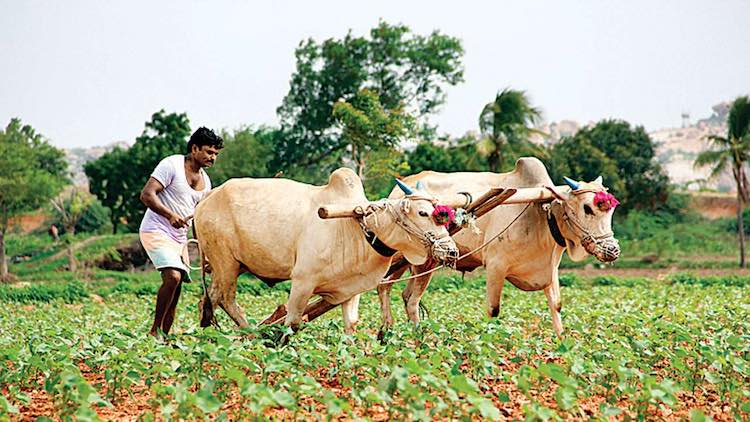 No Proposal Under Consideration To Waive Farmer Loans: Centre