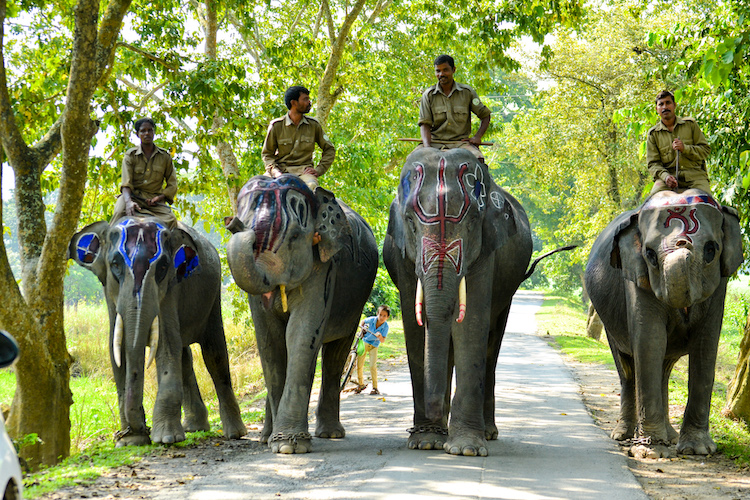 Assam's Kaziranga National Park, Famous For Its One-Horned Rhinos, Reopens To Tourists After Nearly 8 Months