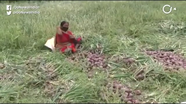 Uttarakhand: Unseasonal Rain, Lockdown Destroy Oni