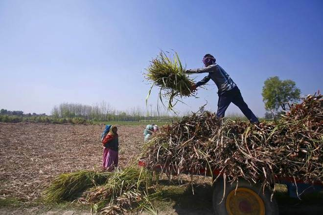 2021 Crisis for Farmers: Covid Lowers Agri Produce