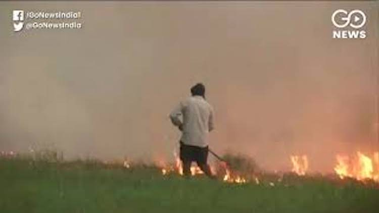 Air Pollution: Stubble Burning Continues Despite S