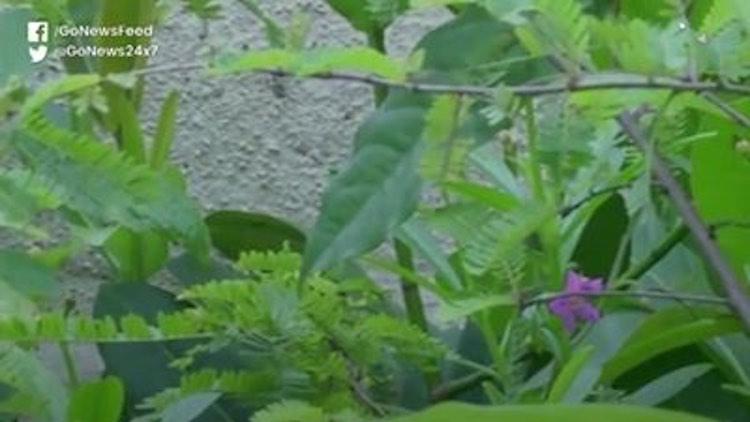 Karnataka Environmentalist Houses Herbal Heaven In