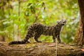 Manas National Park Assam Regains Glory