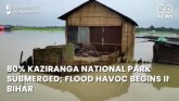 80% Kaziranga National Park Submerged; Flood Havoc