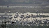Crucial To Bird Migration, India's Wetlands Are Un