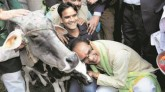 'BJP Did Nothing For Cow Protection In 15-Year Rul