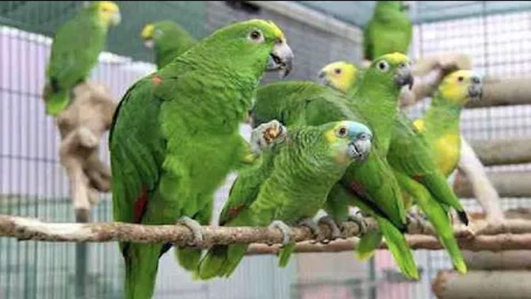 13 Parakeets Produced Before A Delhi Court