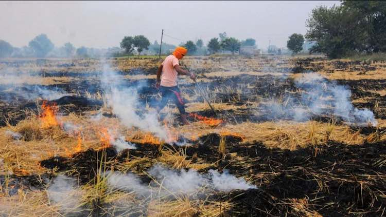 SC Lambasts States Over Stubble Burning, Orders In