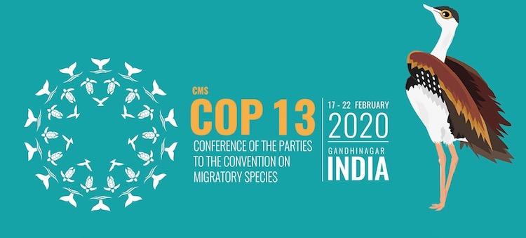 CMS COP 13
