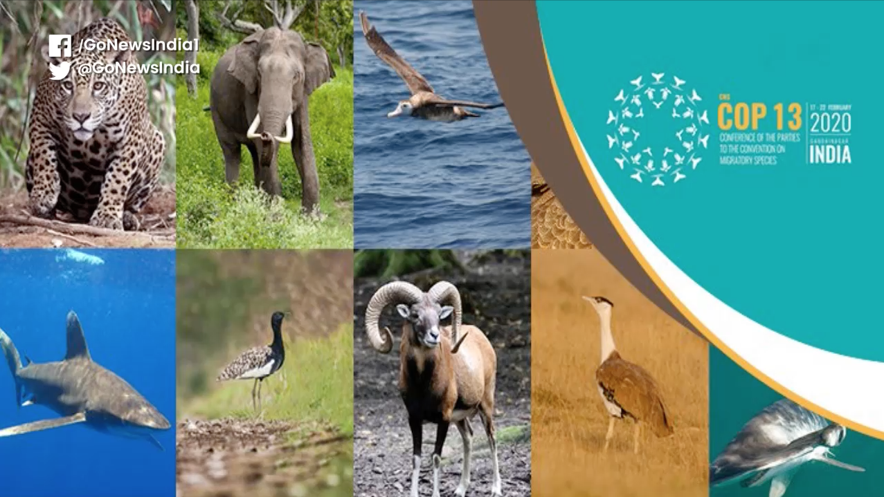 India Proposal On Inclusion Of Certain Species Gets Nod At CMS COP13