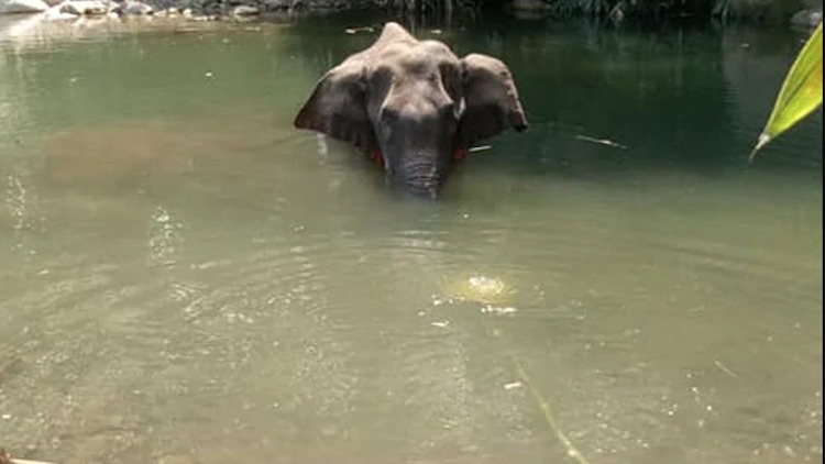 One Held For Alleged Role In Pregnant Elephant's K