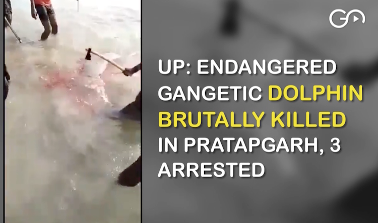 UP: Endangered Gangetic Dolphin Brutally Killed In