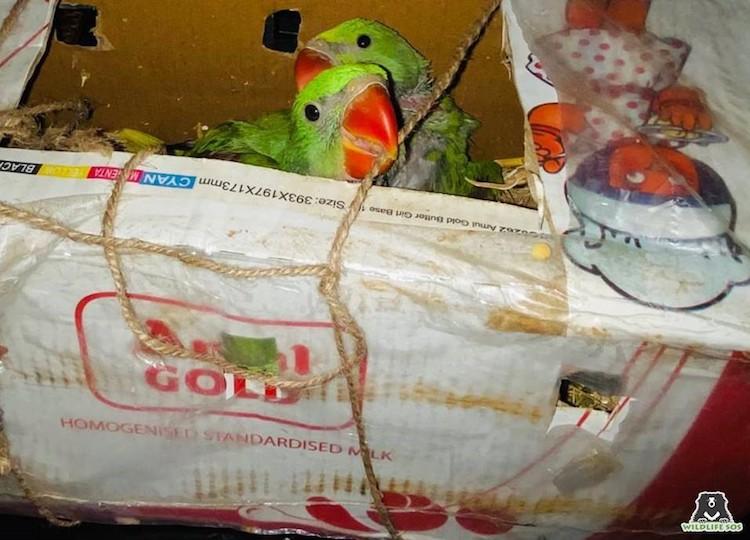 Live Bird Trade