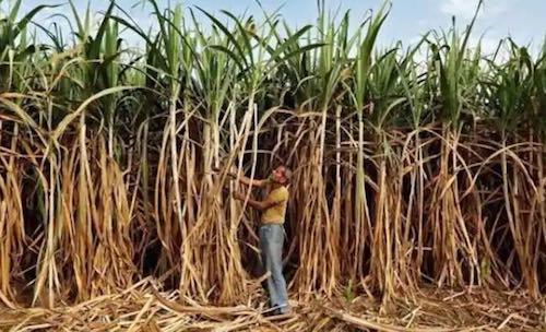 Uttar Pradesh Sugar mills