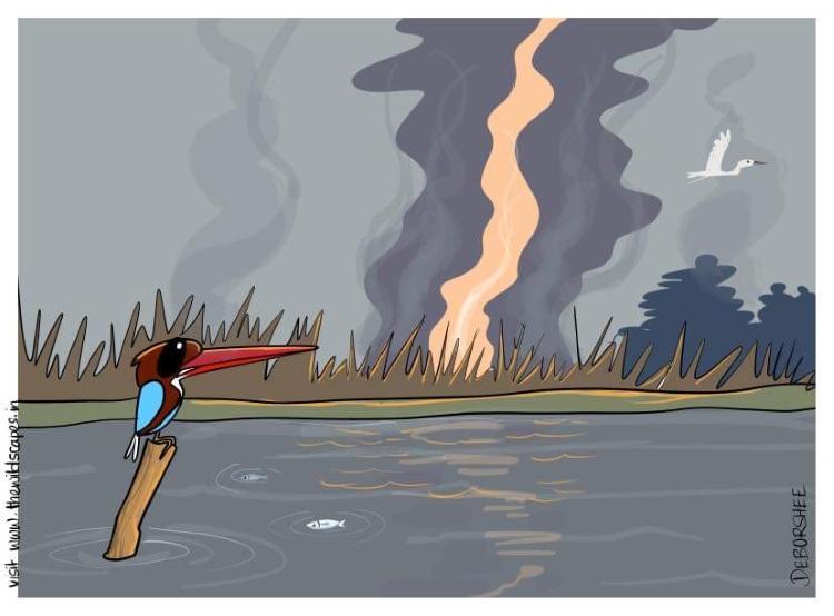 A Cartoonist Captures The Biodiversity of Assam