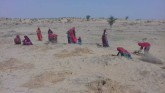The Destructive 'Greening' Of The Thar Desert In I
