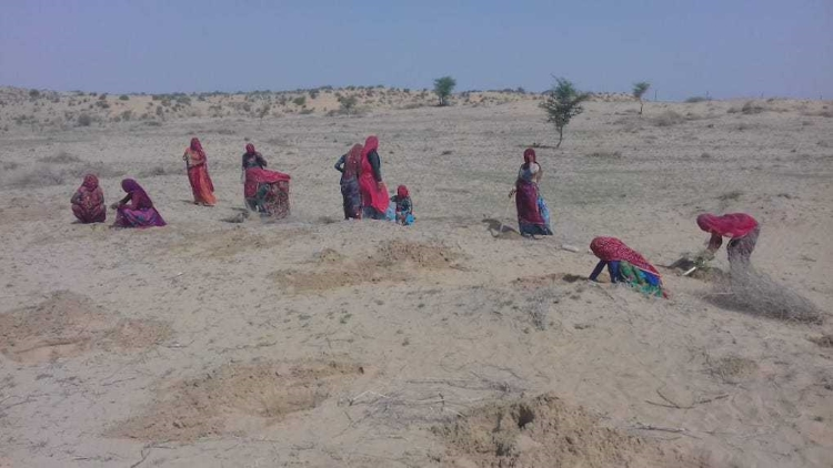The Destructive 'Greening' Of The Thar Desert In I