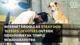 Internet Drools As Stray Dog 'lesses' Devo