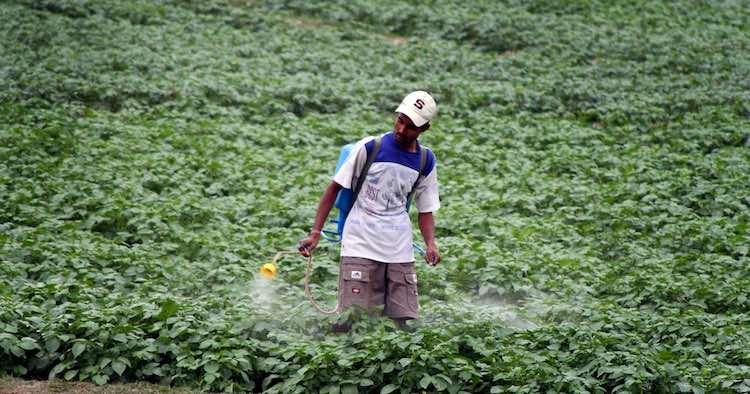 Pesticides Usage in India