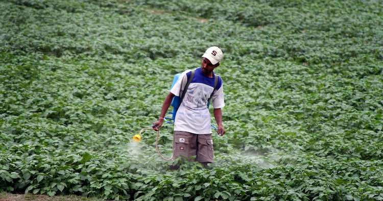 Pesticides Usage in India