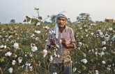 India's Agri Exports Consistently Lagging Behind,