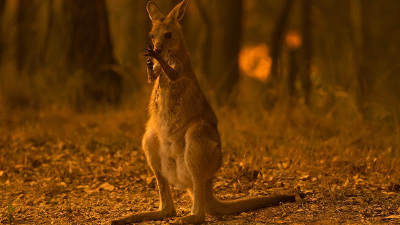 Catastrophe continues in Australia, fire death tol