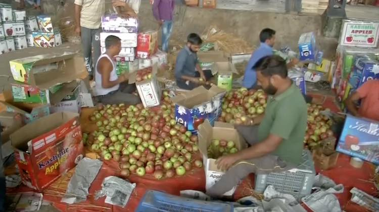 Hailstones Destroy Apple Worth Of Lakhs In Shimla