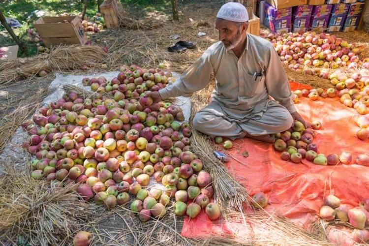 Jammu and Kashmir: Apple businessmen in critical c