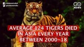 Average 124 Tigers Poached Every Year In Asia Betw