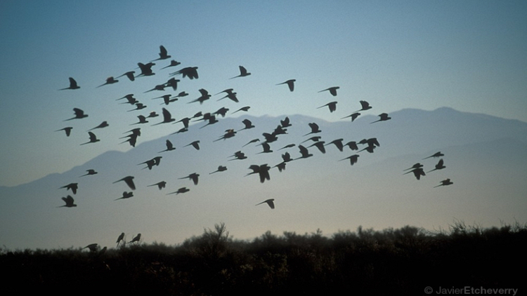 Birds In North America