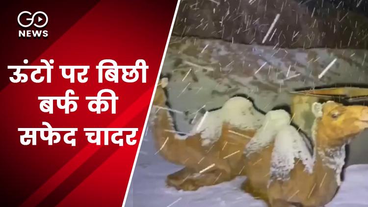 Camel Trade On Decline In Pushkar Fair