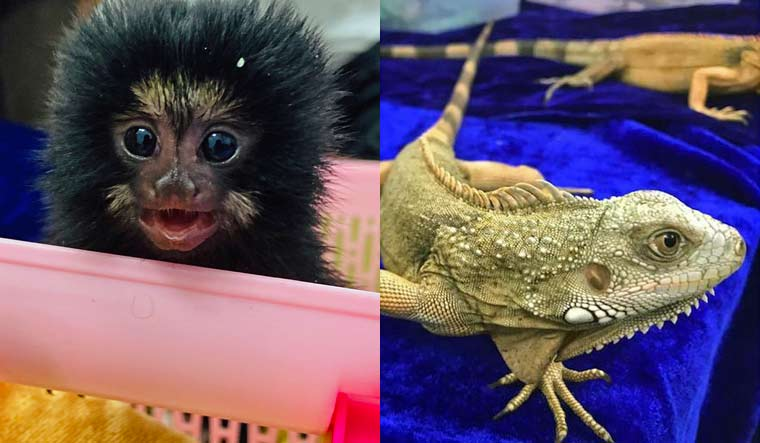 Exotic Wildlife Species Seized At Chennai Airport