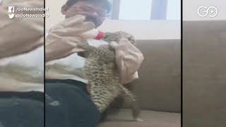 Abandoned Leopard Cubs Find New Home In Sanjay Gan