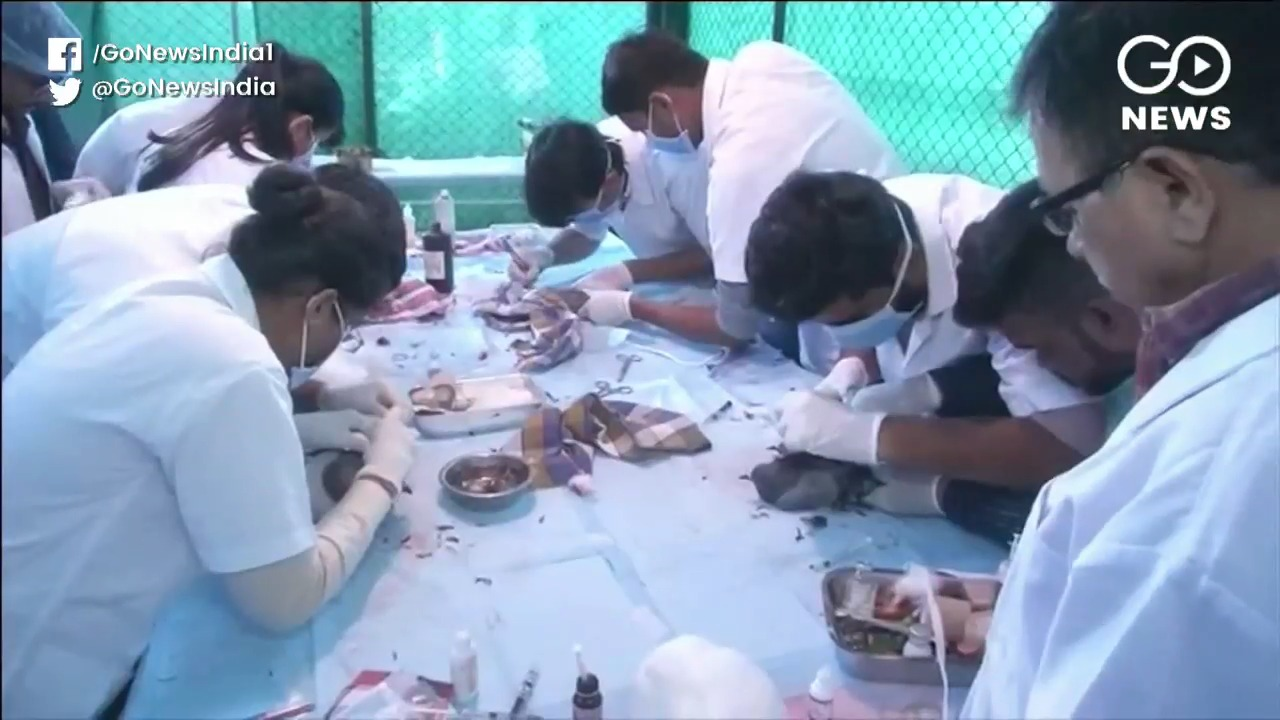 Medical Teams Attend To Kite-Hit Birds
