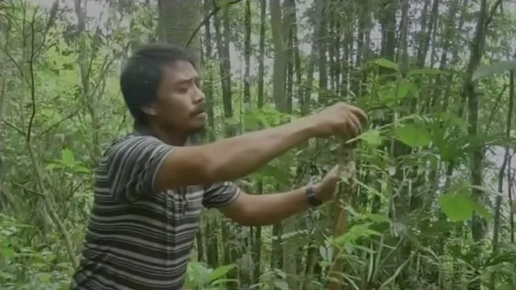 Imphal Man Turns 300 Acres Barren Land Into A Fore