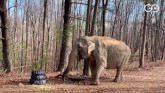 Hundreds Of Indians Killed Each Year In Elephant,