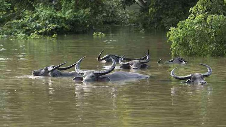 Assam Floods And Landslides Death Toll Nears 100,
