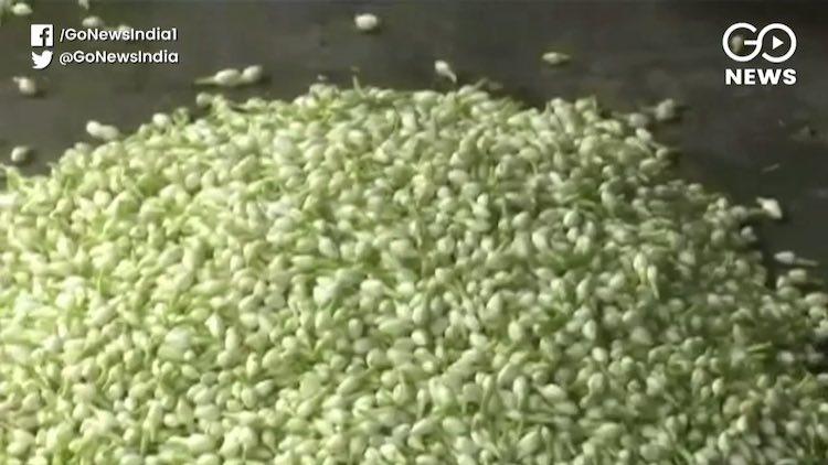 Tamil Nadu: Jasmine Prices Skyrocket