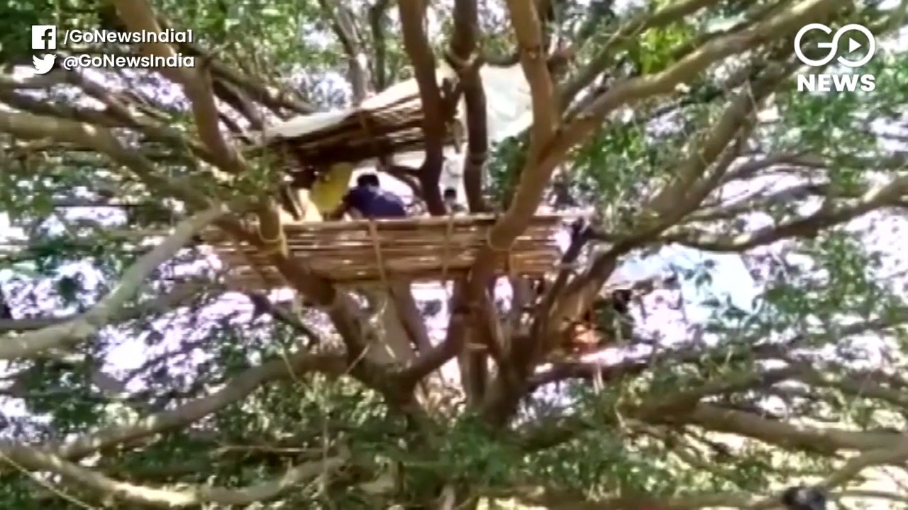 West Bengal: 'Tree Quarantine' For Labourers With