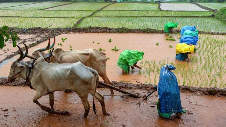 How Farmers Are Suffering In Power Game Of Mahara