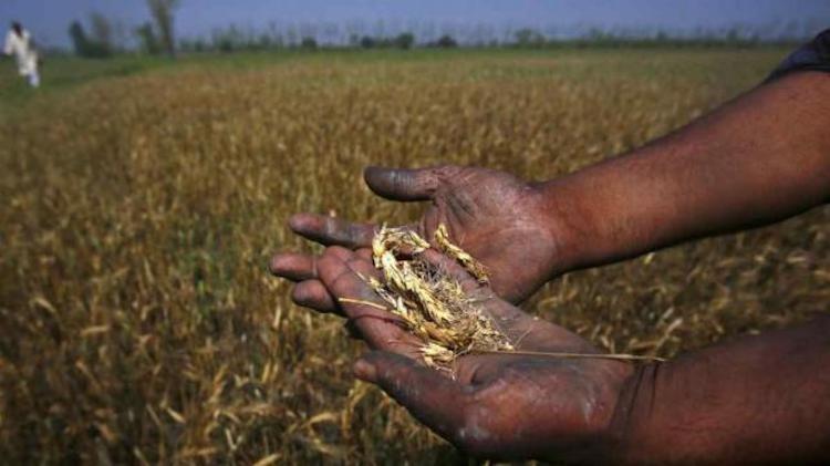 Unseasonal Rain And Hail Destroy Standing Crops