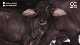 4.6% Increase In Livestock Between 2012-19