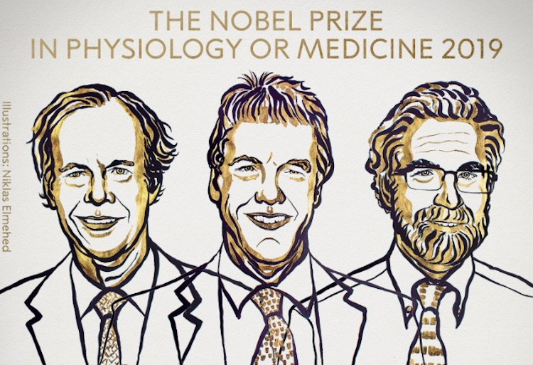Hypoxia Researchers Win 2019 Nobel Prize For Medic