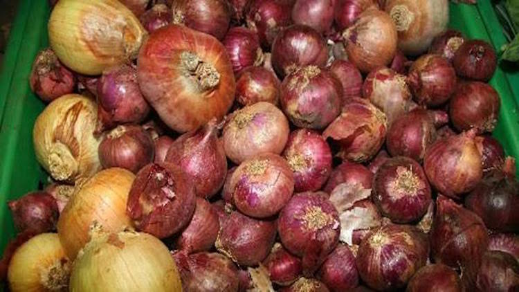 Imported Onion's Poor Quality Hurting Traders