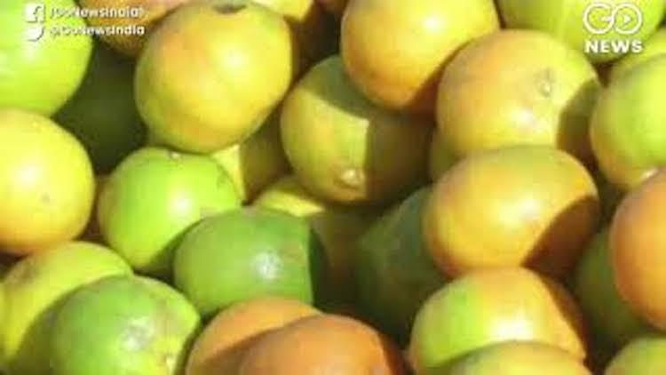 Darjeeling Oranges Lose Shine