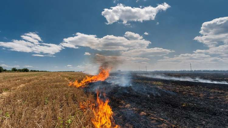 Stubble Burning: Crop Fires Start, Rate Higher Tha
