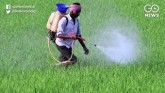 Pesticide Use On The Rise In India