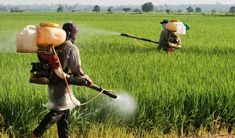 Campaign against chemical pesticides worldwide, bo