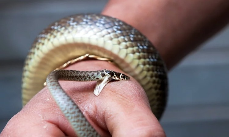 2 lakh 20 thousand cases of snake bite across the
