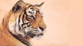 'Largest Camera Trap Wildlife Survey': India's 201